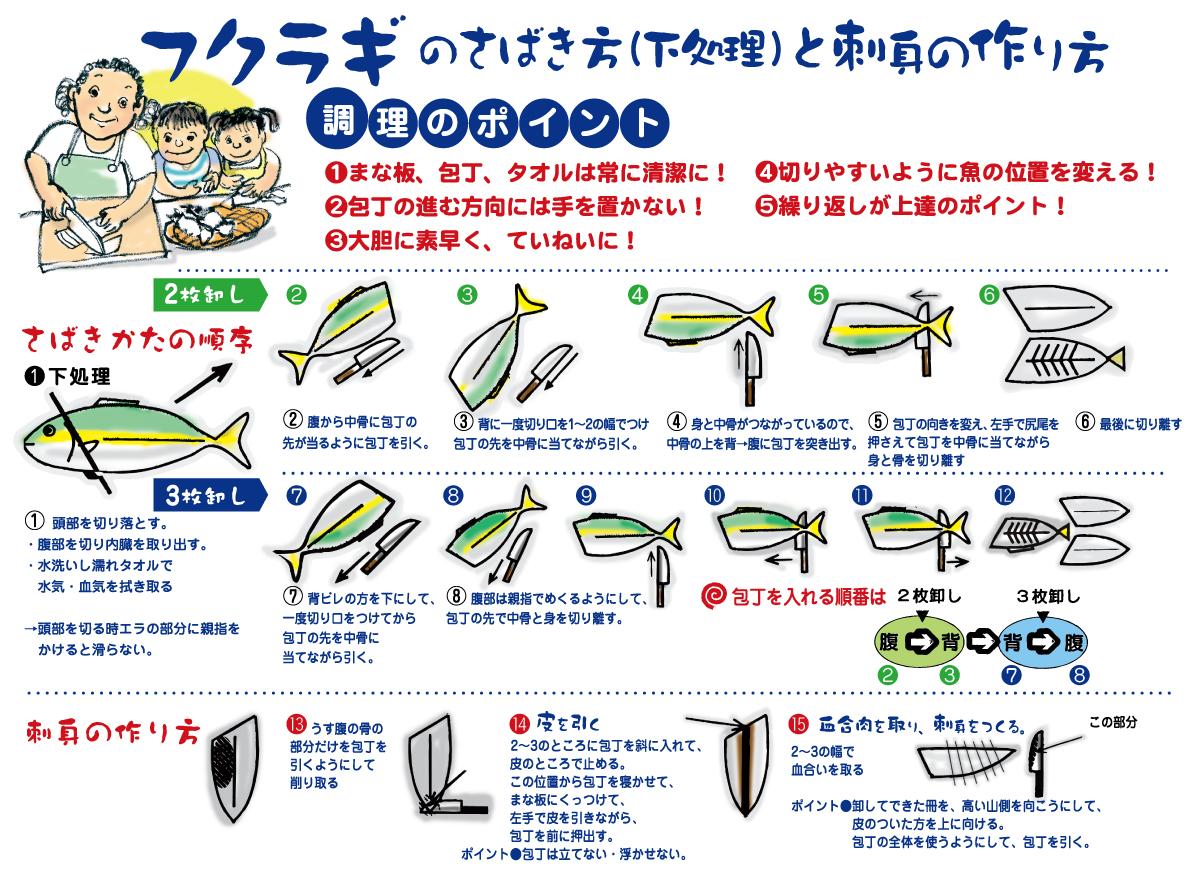 フクラギのさばき方(下処理)と刺身の作り方
