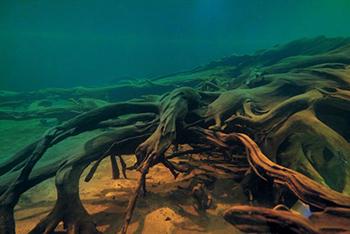 埋没林・海底林
