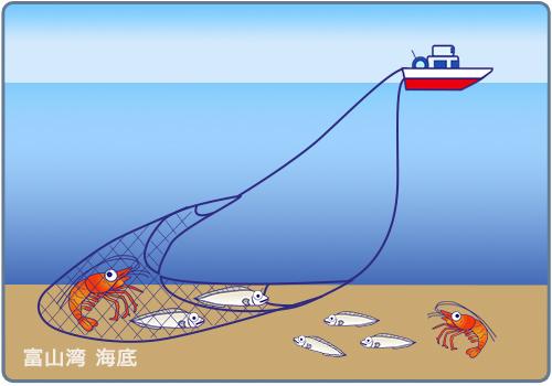 小型機船底びき網漁業
