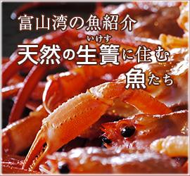 富山湾の魚紹介 天然の生簀に住む魚たち