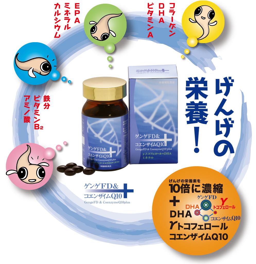ゲンゲ成分に、 数多くの栄養成分をバランスよく配合した、 理想的なサプリメントです。